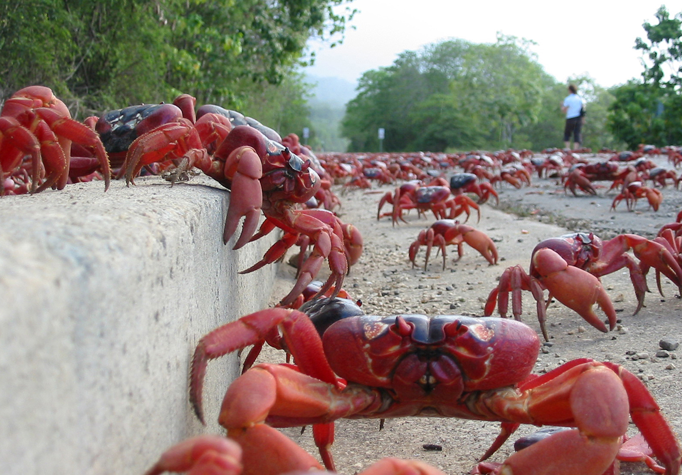 Red-Crabs-Christmas-Island-1-IMG-TESTO