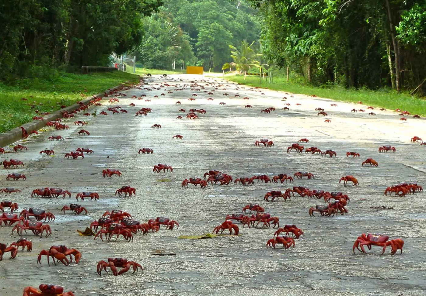 Red-Crabs-Christmas-Island-2-IMG-TESTO