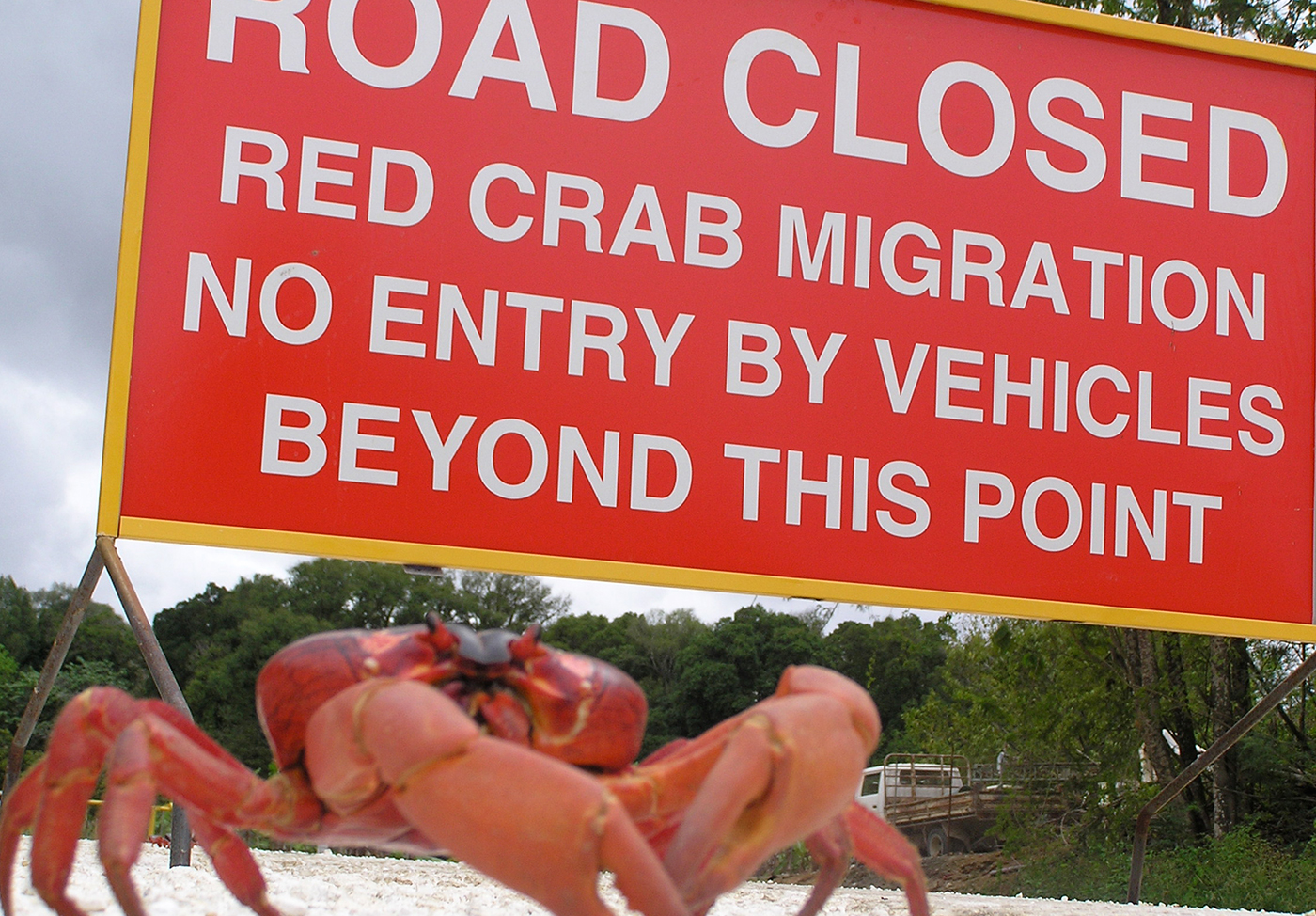 Red-Crabs-Christmas-Island-3-IMG-TESTO