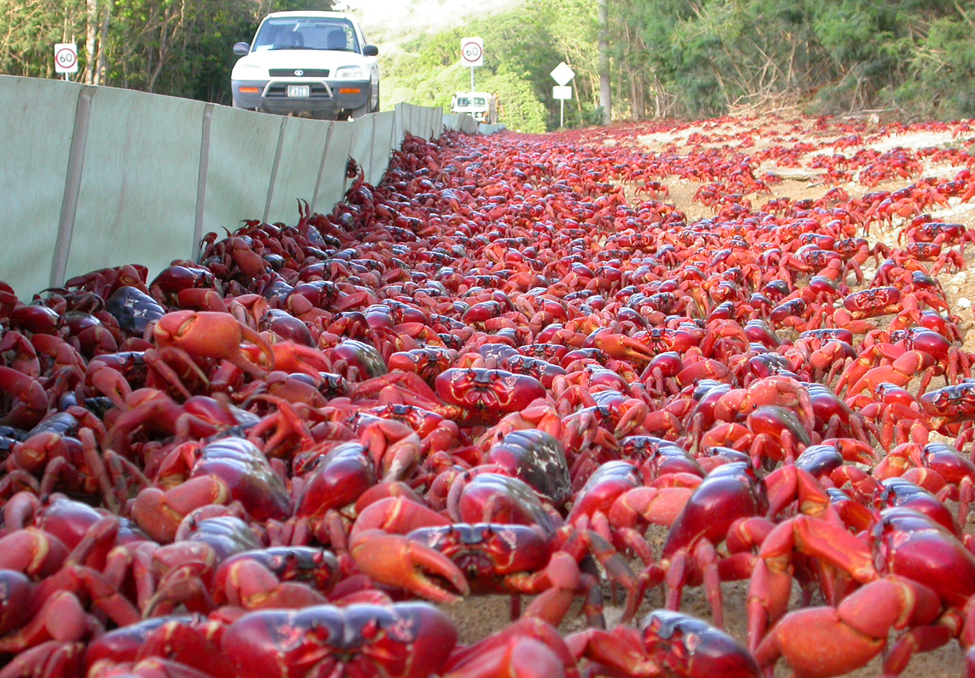 Red-Crabs-Christmas-Island-4-IMG-TESTO