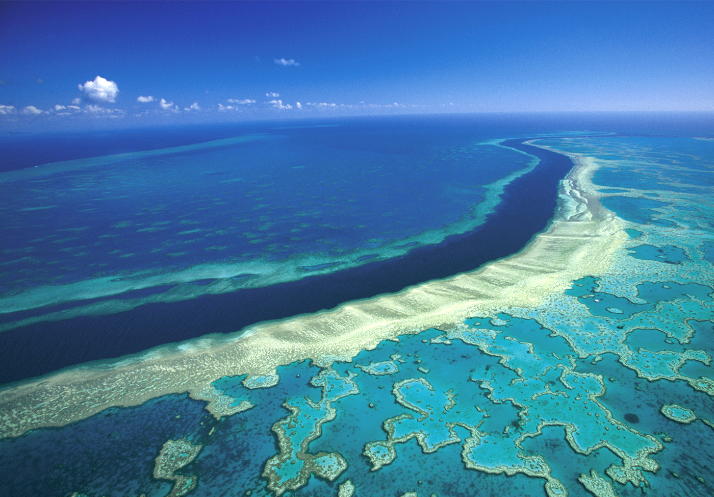 coral-spawing-great-barrier-reef-australia-4