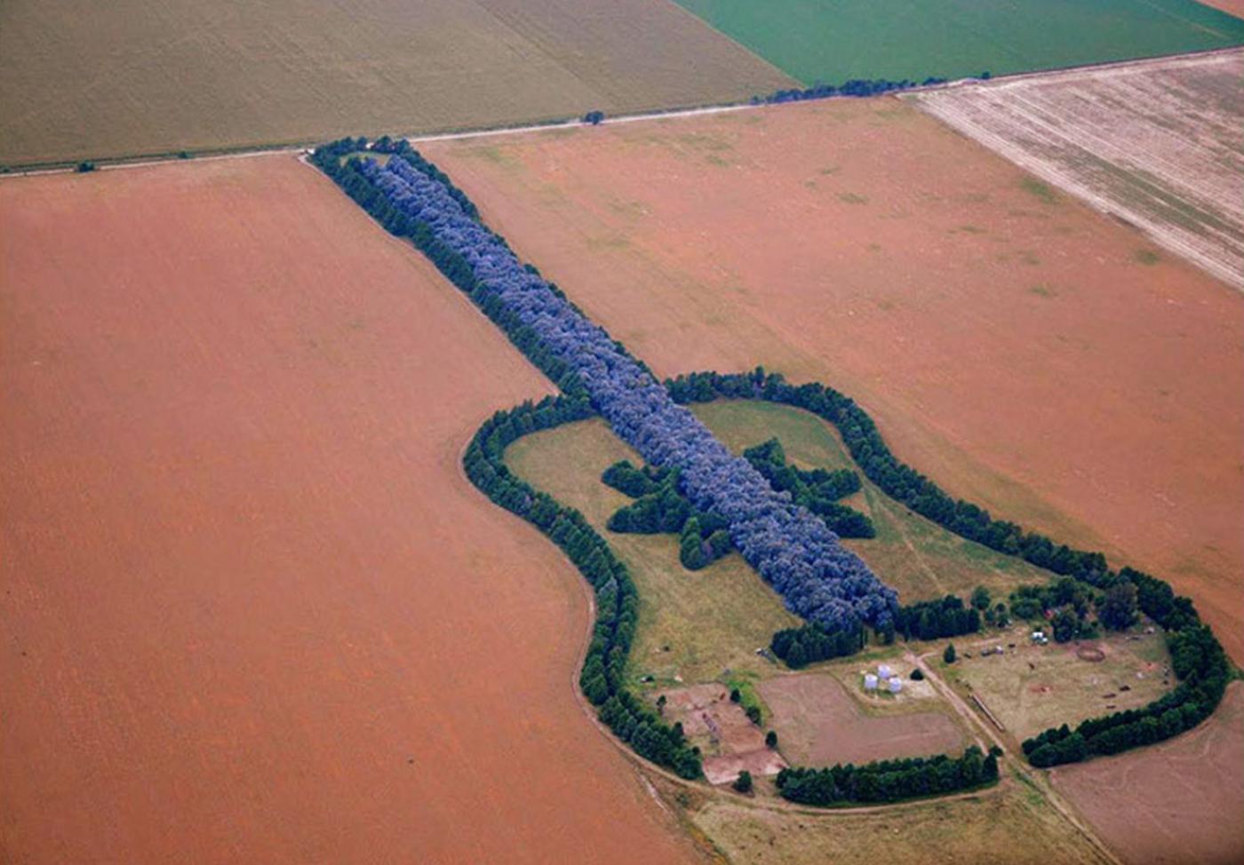 guitar-forest-argentina-1