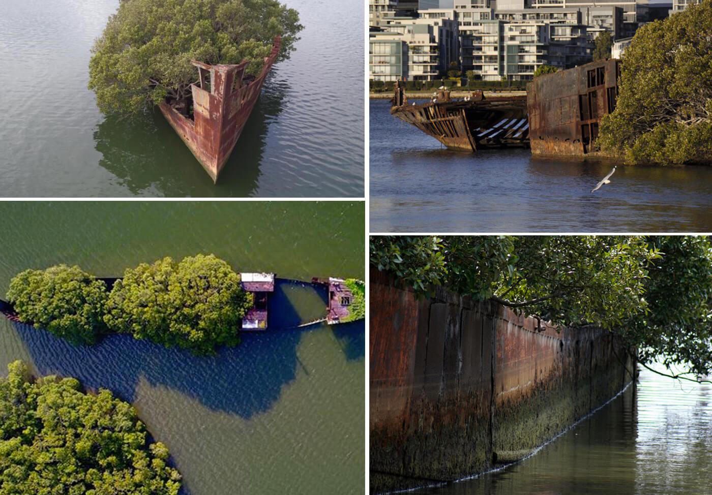 Floating-Forest-Sidney-Australia