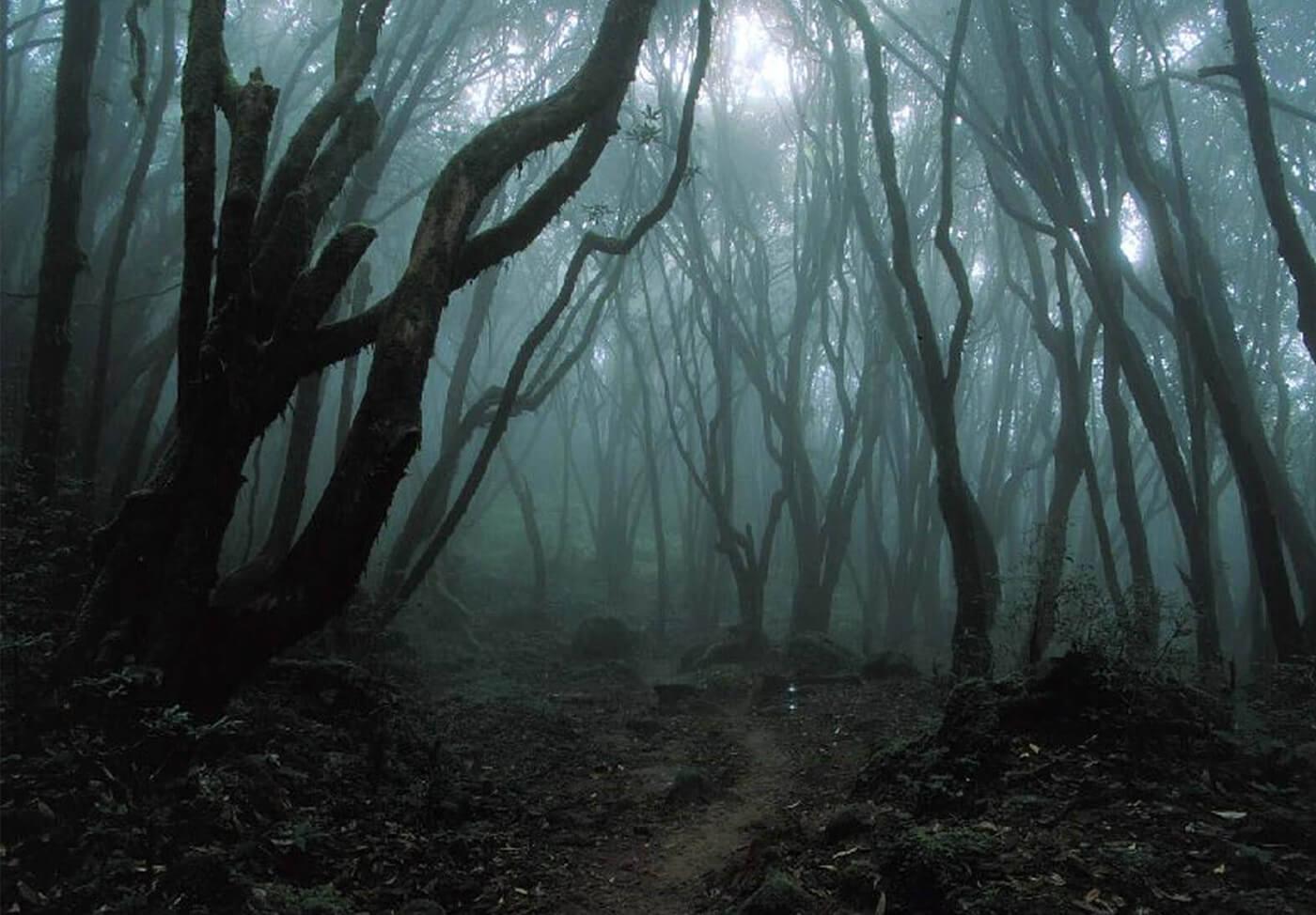 Hoia-Baciu-Forest-Romania