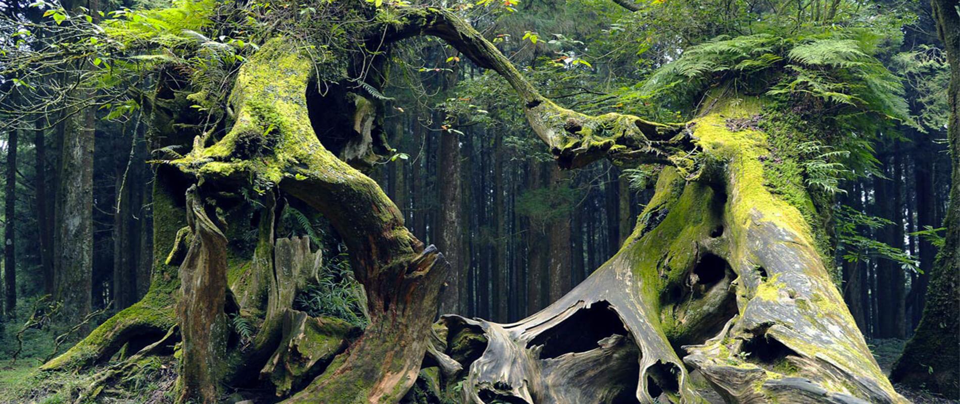 Hoia Baciu, la foresta dei misteri in Transilvania