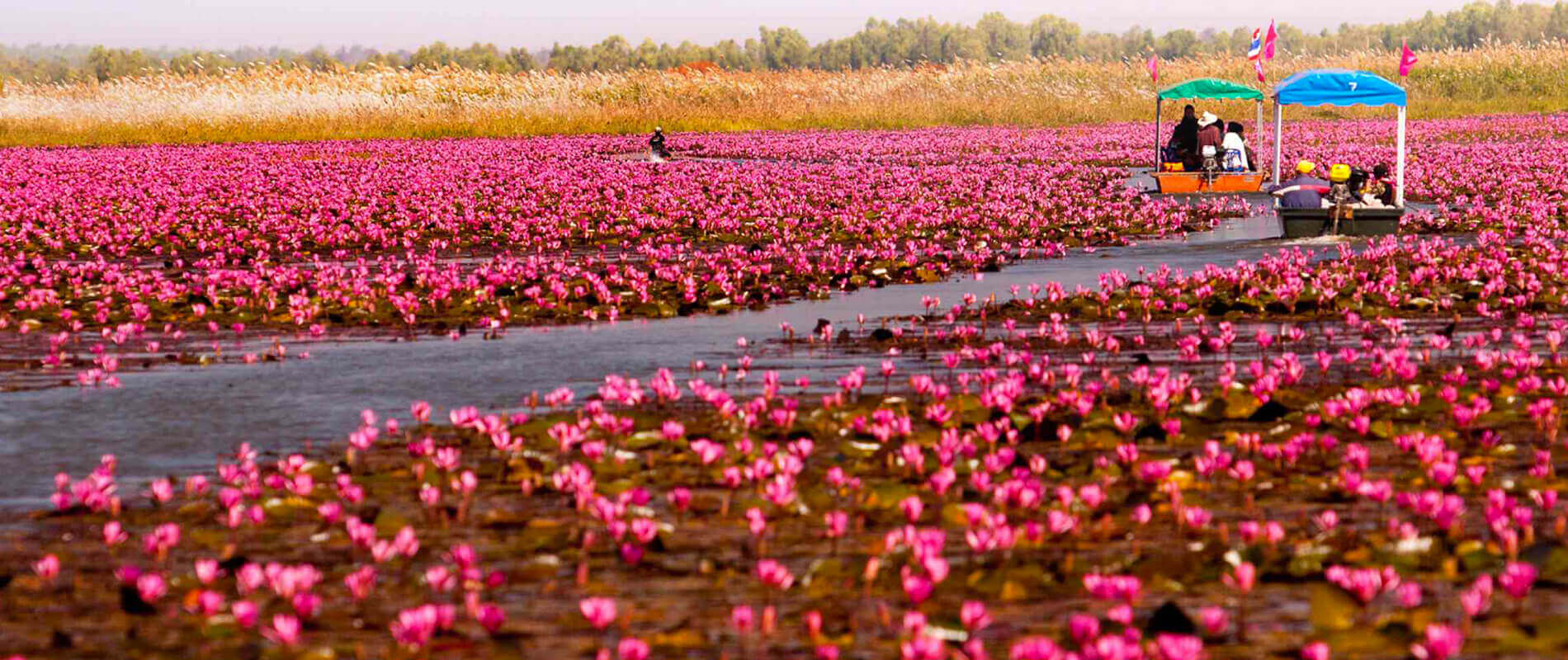 Mybestplace Nong Han Kumphawapi The Lake Covered With Lotus Flowers