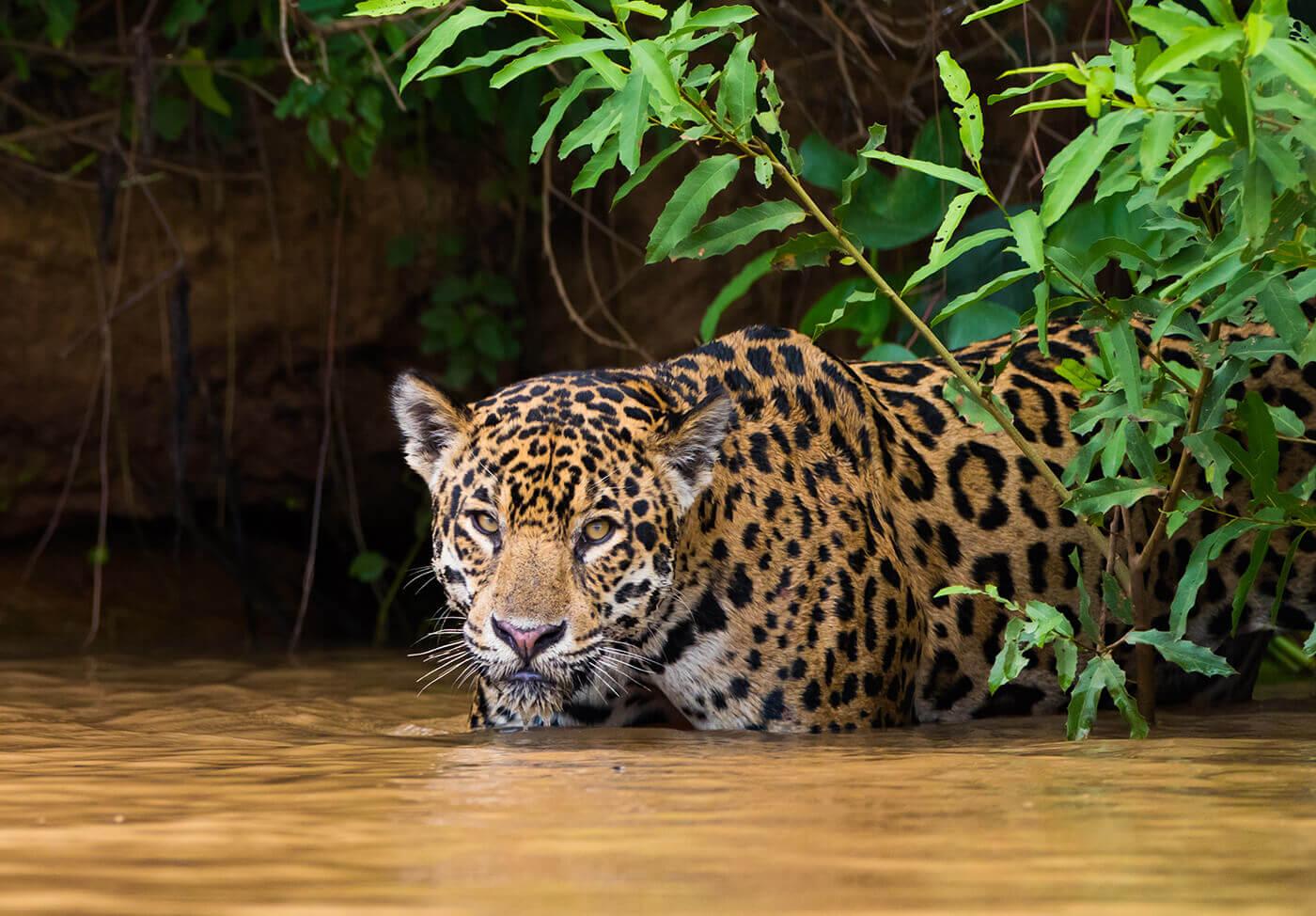 Pantanal-Brasile-3