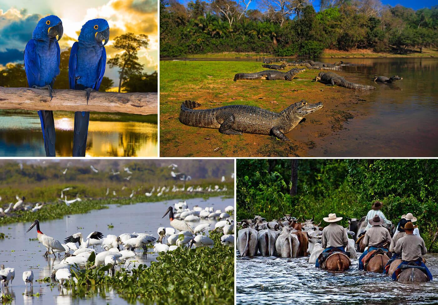 Pantanal-Brasile-4