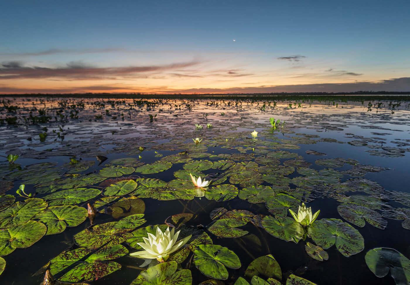 Pantanal-Brasile-5