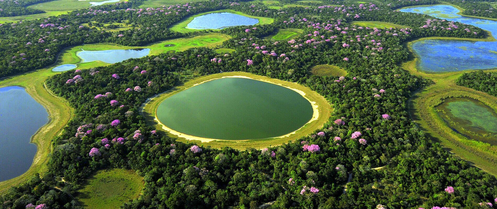 Pantanal, Il volto più selvaggio del Brasile