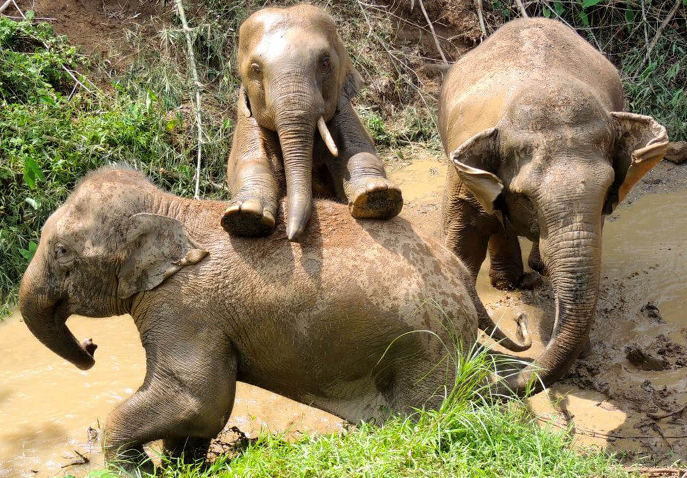 Elephant-Jungle-Sanctuary-Phuket-2