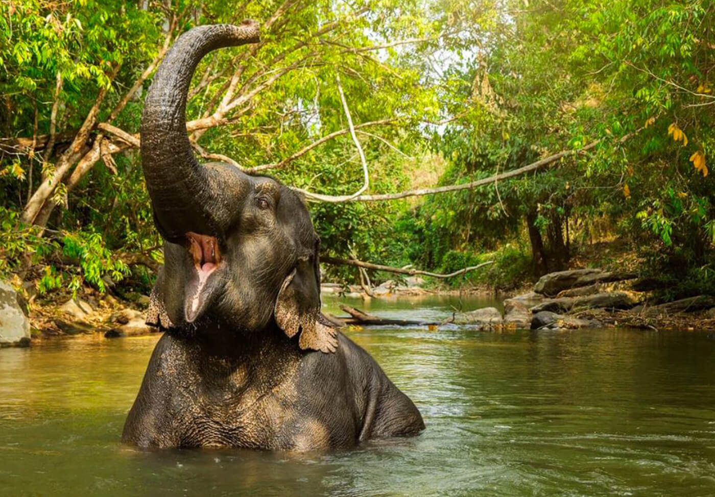 Elephant-Jungle-Sanctuary-Phuket-4