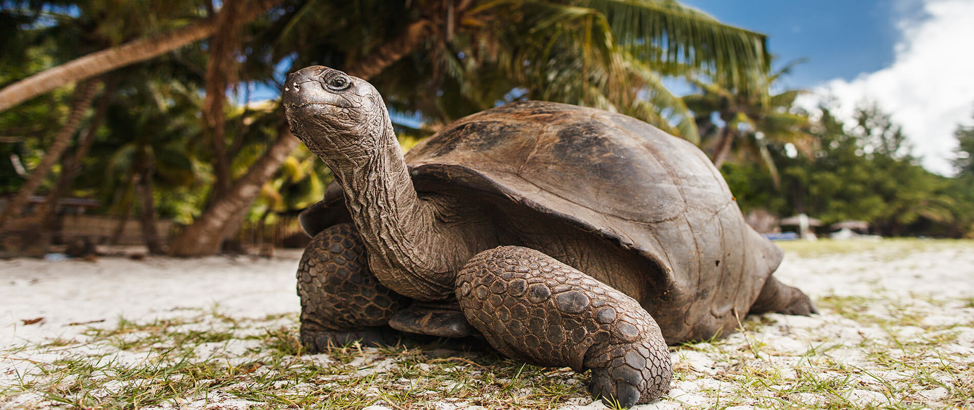 Curieuse Island, a Paradise of Giant Tortoises