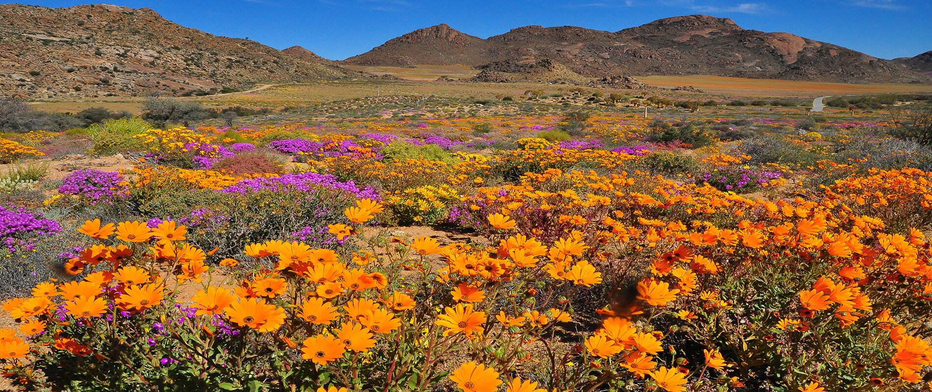Namaqua National Park, the Magical Blooming Desert of South Africa