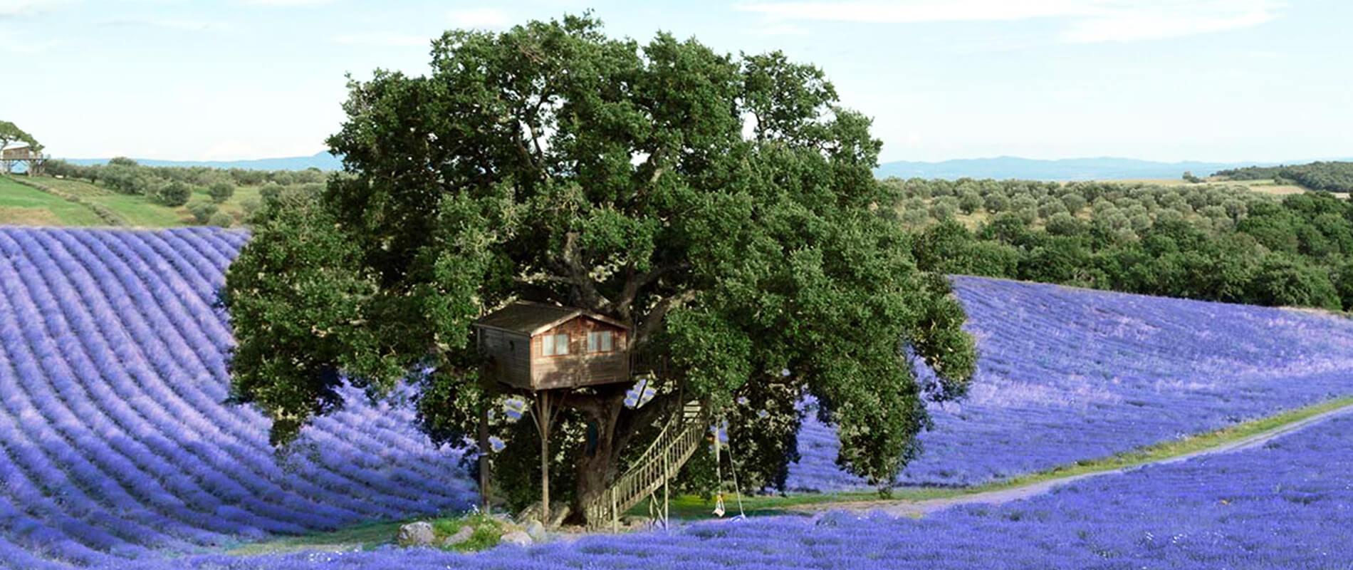 La Piantata, a Tree House Among Lavender Fields