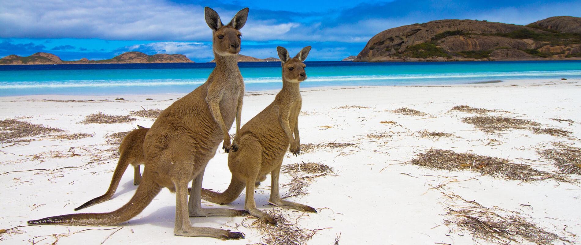 Kangaroo Island, an unspoiled oasis in South Australia